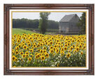 Framed Sunflower Farm New England Photo to Canvas Painting Repro Wall Art Print