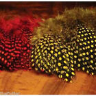 STRUNG GUINEA FEATHERS -- Fly Tying