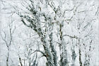 "Poster / Leinwandbild ""Hoare Frost and Snow on Winter Trees"" - Mike Hill"