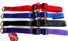 Softex® & Brass Half Check Martingale Dog Collar Colour & Size Choice