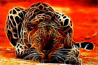 Leopard Canvas Pictures The Desert Heat Modern Design Wall Art Prints All Sizes