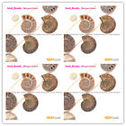 Beautiful Conch Fossil GemstoneJewelryMaking LooseBeads 7 pcs,Seed beauty25-30mm