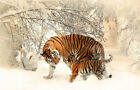 Modern Home Decor HD print oil painting art on canvas (No stretch) Tiger HXT216