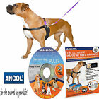 Ancol PDL Happy at Heels Dog Harness & Lead Set, 4 Sizes Small -XL