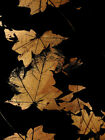 Carlyle Fine Art Nature Autumn by Jordan Carlyle Graphic Art