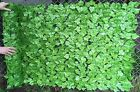 Best Artificial 3m x 1.5m Light English Ivy Leaf Screening Hedging Garden Fence