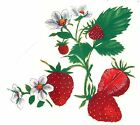 Strawberry Cluster Select-A-Size Waterslide Ceramic Decals Xx  image