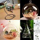 Hanging Glass Ball Vase Flower Plant Pot Terrarium Container Decor With Stand A