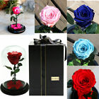 Beauty And The Beast Enchanted Rose. Rose In Dome. Bell Jar, Cloche With Rose
