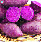 100 sweet potato seeds Ipomoea batatas seeds from thailand