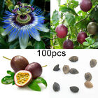 100Pcs Tropical Exotic Vine Passion Purple Passiflora Edulis Fruit Seeds Exotic
