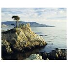 The Lone Cypress Tree on the coast, Poster Art Print,  Home Decor