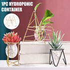 Table Desk Bulb Abs Hydroponic Vase Flower Plant Pot With Iron Tray Home Decor