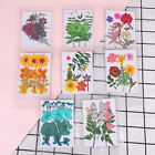 Pressed flower bag mixed organic natural dried flowers diy art floral deco BW