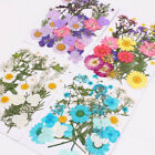 Pressed Mixed Natural Dried Flowers DIY Art Craft Handicraft Gift Decoration HOT