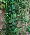 7.87ft Artificial Vine Green ivy Leaf Garland Plants Foliage Home Party Decor