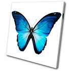 Animals Morpho Butterfly Blue SINGLE CANVAS WALL ART Picture Print VA