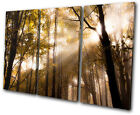 Landscapes Forest TREBLE CANVAS WALL ART Picture Print VA