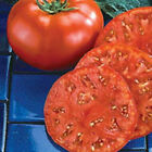 Tomato Seed: Beefmaster Tomato Seeds Fresh Seed FREE Shipping