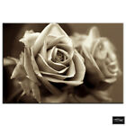 Rose Love Sepia Floral BOX FRAMED CANVAS ART Picture HDR 280gsm