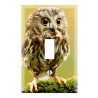 Baby Owl Decorative Wall Plate Cover