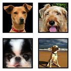 Your Pet Photos as Canvas Print Framed Ready to Hang