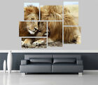 Lions in the Jungle Removable Self Adhesive Wall Picture Poster 1181