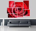 Red Rose in Morning dew Flowers Removable Self Adhesive Wall Picture Poster 1262