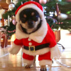 Pet Small Dog Cat Santa Claus Costume Outfit Jumpsuit Clothes Hat For Christmas