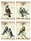 Внешний вид - Vintage Image Pink Roses Bird Labels Furniture Transfer Waterslide Decals BIR854