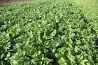 0.25 - 50 lb Animal Food Plot Mix - Radish Turnip Sugar Beet - Deer Turkey Cover