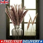 15-60x Natural Dried Pampas Grass Reed Home Wedding Flower Bunch Home Decoration