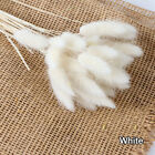 15/30x Artificial Dried Pampas Grass Phragmites Communis Bunch Home Decor White